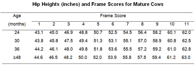 Frame Score Mature Cows